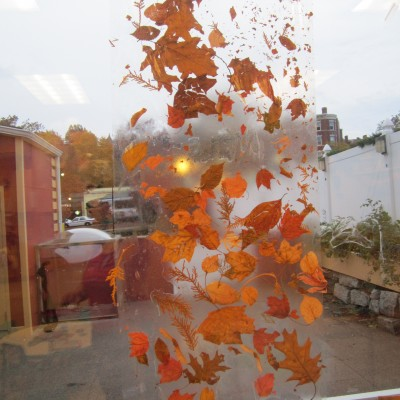 Leaves on Sticky window paper